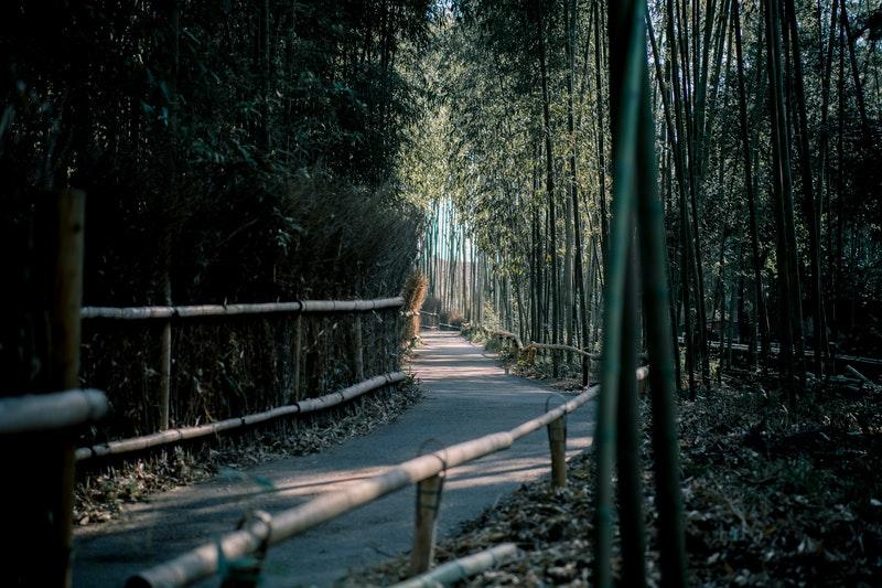 Is bamboo environmentally friendly?