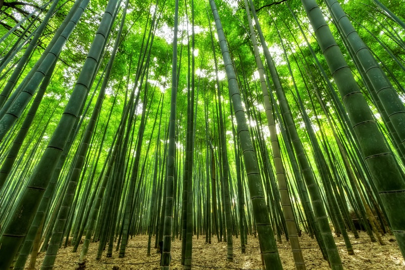 What is the disadvantage of bamboo?