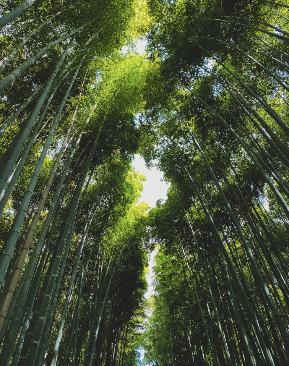 Bamboo plants can grow really fast.