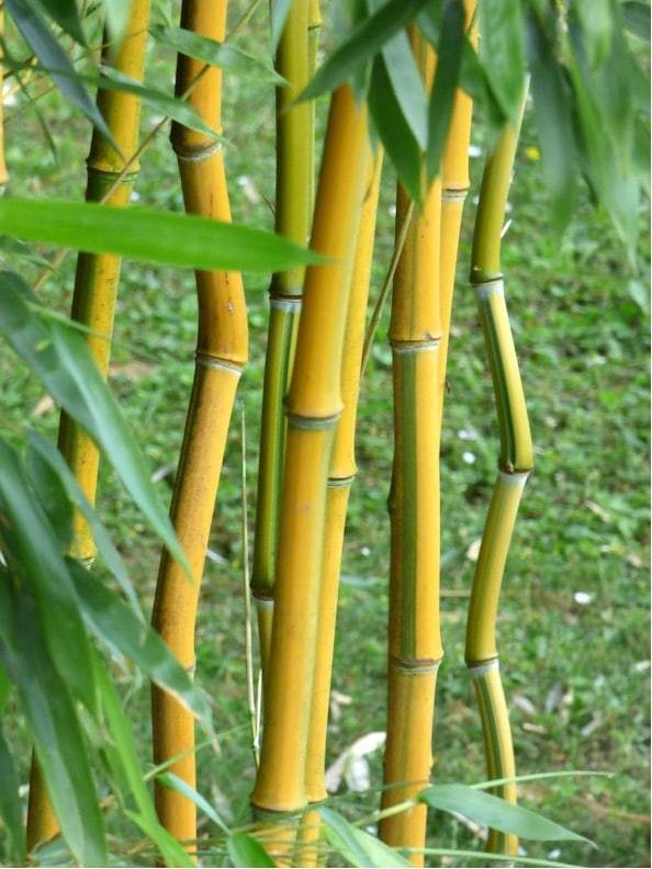 Planting bamboo on the ground.