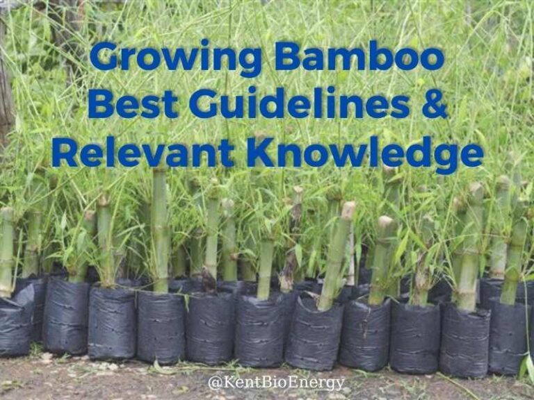 Growing Bamboo - Best Guidelines & Relevant Knowledge
