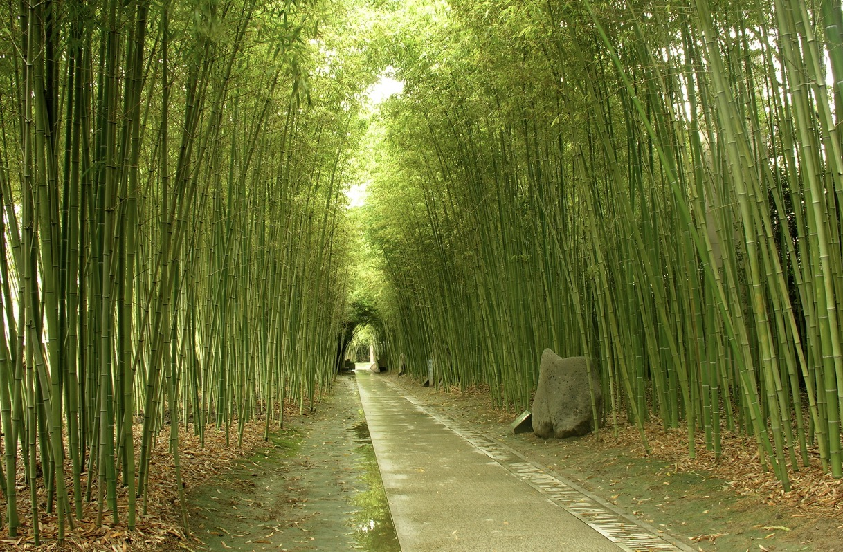 Bamboo Plantation Is Low-cost and Easy